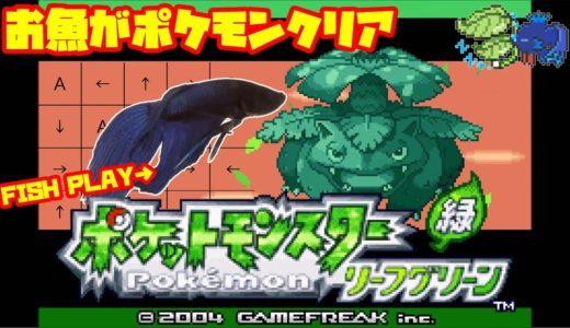 【1271h~_ポケモンタワー編】ペットの魚がポケモンクリア_Fish Play Pokemon【作業用BGM】